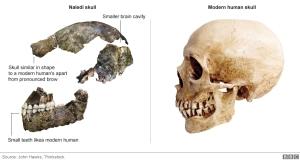 skulls_976