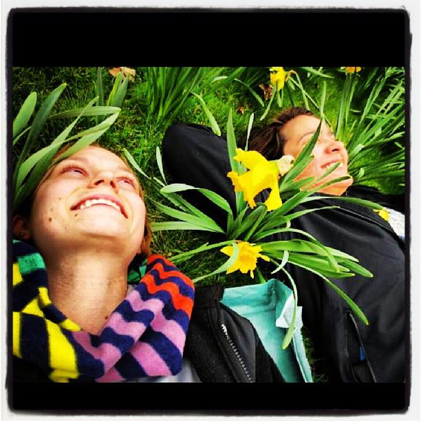 Ireland Daffodils
